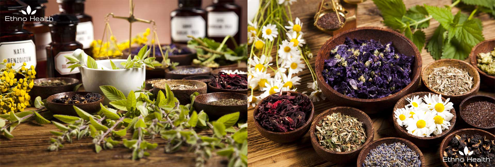Diverse Kräuter und Reagenzien, die zu Bio-Produkten von Ethno Health verarbeitet werden